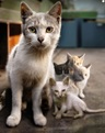 Adult cat with three kittens beside it