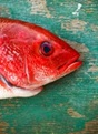 Red fish head with green background